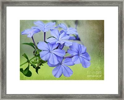 I Love Blue Flowers Framed Print by Sabrina L Ryan