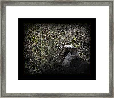 I See You Framed Print by Ernie Echols