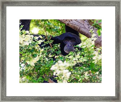 Framed Print featuring the photograph I See You by John Johnson