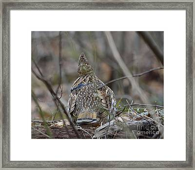 I See You Framed Print by Randy Bodkins