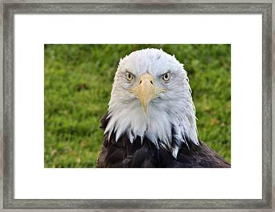 I See You Framed Print by Wayne Sheeler