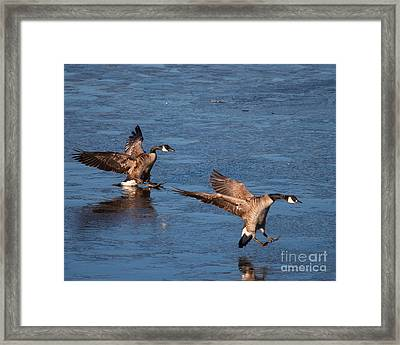 Framed Print featuring the photograph Icy Landing by Dale Nelson