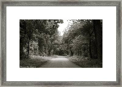 Framed Print featuring the photograph Icy Trees by Roseann Errigo