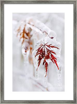 Icy Winter Leaf Framed Print
