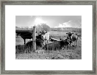 I'd Like To Get To Know You Framed Print by Diana Angstadt