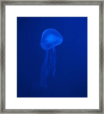 Illuminated Colour Jellyfish Framed Print by Petr Bonek