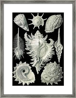 Illustration Shows Aquatic And Terrestrial Snails Framed Print by Artokoloro