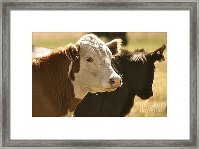 Framed Print featuring the photograph I'm Watching You by Barbara Dudley