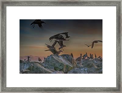 In Flight Framed Print by Bill Roberts