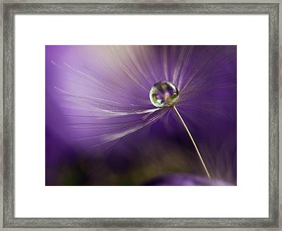 In Shades Of Purple Framed Print