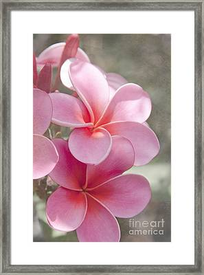 In The Path Of A Dream Framed Print