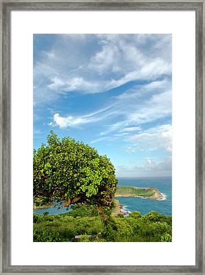 Indian Creek Point, Antigua, West Framed Print by Nico Tondini