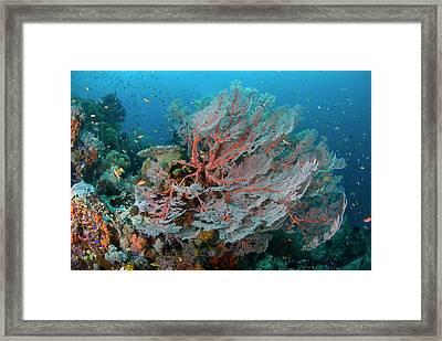 Indian Ocean, Indonesia, Papua, Raja Framed Print