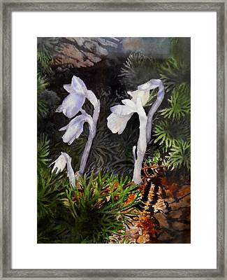 Indian Pipes Framed Print by Enola McClincey