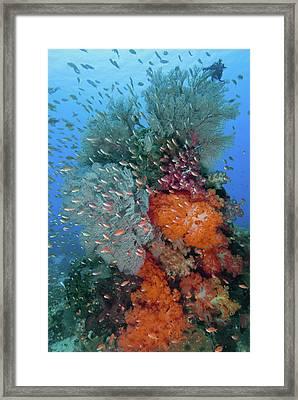 Indonesia, Komodo National Park, Fish Framed Print by Jaynes Gallery