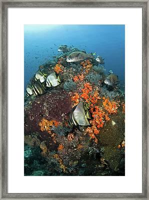 Indonesia, Komodo National Park, Tatawa Framed Print by Jaynes Gallery