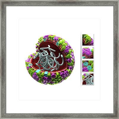Influenza Virus Structure Framed Print by Harvinder Singh