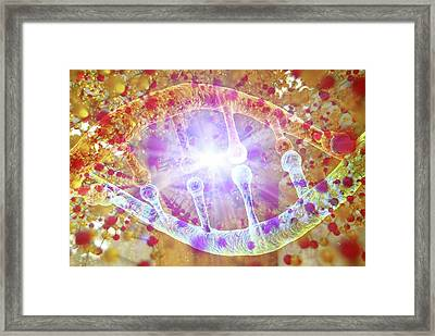 Information Storage In Dna And Silica Framed Print by Alfred Pasieka