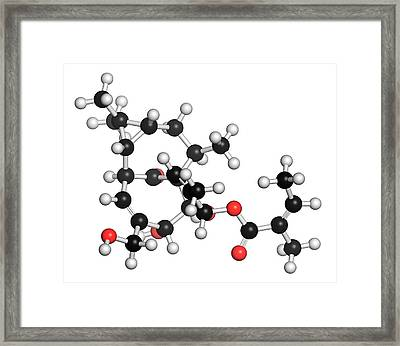 Ingenol Mebutate Actinic Keratosis Drug Framed Print by Molekuul
