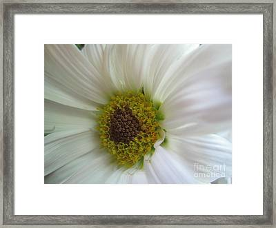 Innocence Framed Print