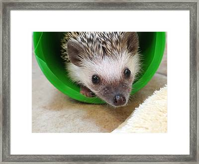 Framed Print featuring the photograph Inquisitive by Nick David