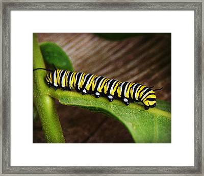Insect Caterpillar Framed Print by Carol Toepke