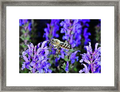 Insect In Flight, High Speed Framed Print
