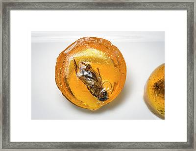 Insects For Human Consumption Framed Print by Philippe Psaila