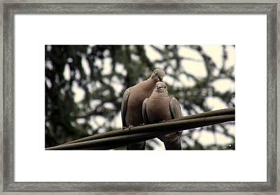 Insieme Framed Print by Halina Nechyporuk
