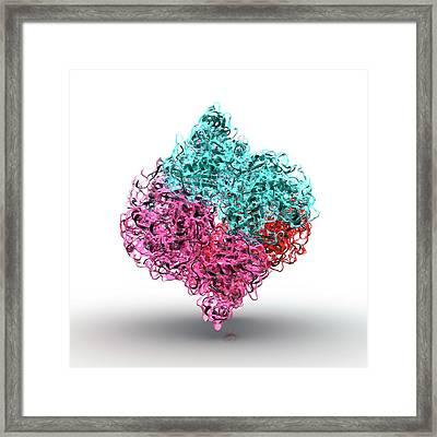 Insulin Molecule Framed Print by Animate4.com/science Photo Libary