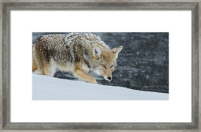 Intensity Framed Print by Yeates Photography