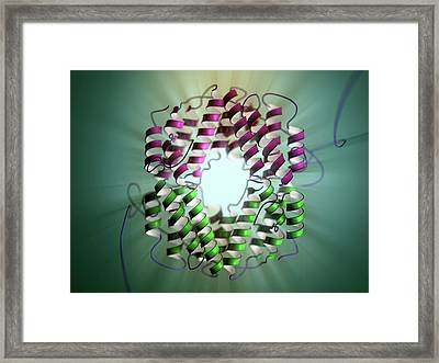 Interferon Gamma Framed Print