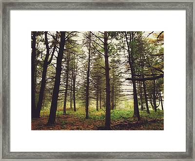 Into The Forest Framed Print by Nikki McInnes
