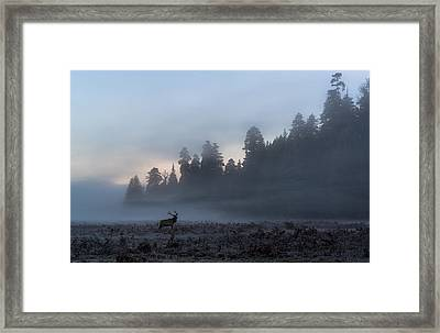 Into The Mist Framed Print by Scott Warner