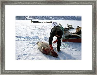Inuit Hunter Butchering A Seal Framed Print by Louise Murray