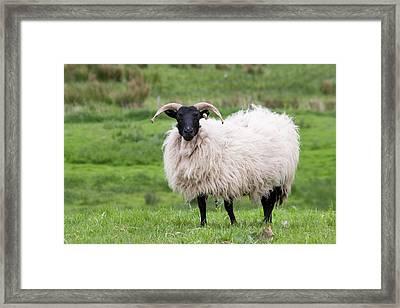 Ireland, County Mayo, Westport Framed Print