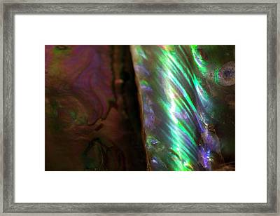 Iridescent Baculites Fossil Shell Usa Framed Print by Paul D Stewart