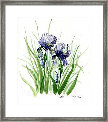 Iris I Framed Print by Steven Schultz