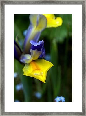 Iris Framed Print by Nigel Watts