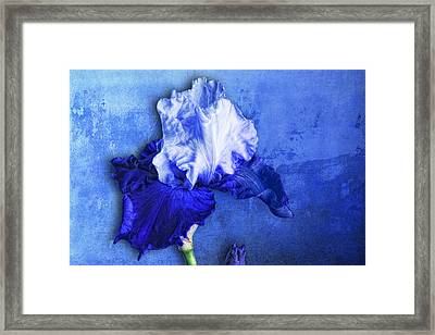 Framed Print featuring the photograph Iris Number Five by Bob Coates