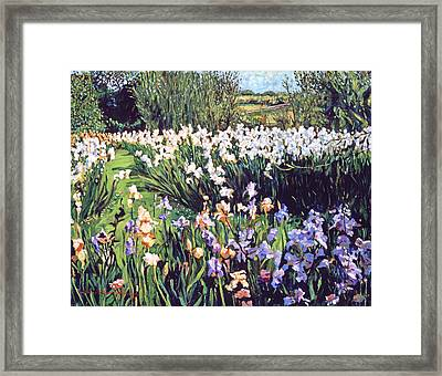Irises Provence Framed Print by David Lloyd Glover