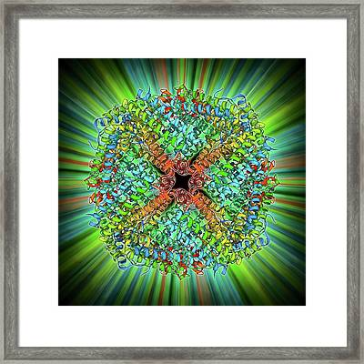 Iron Storage Molecule Framed Print
