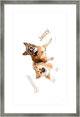 Islandig Sheepdog Iphone 4 Case Framed Print