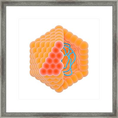 Isometric Virion Framed Print by Science Photo Library
