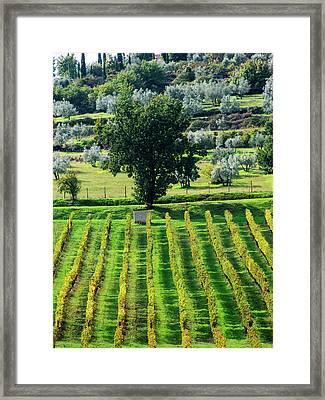 Italy, Tuscany, Chianti, Autumn Framed Print