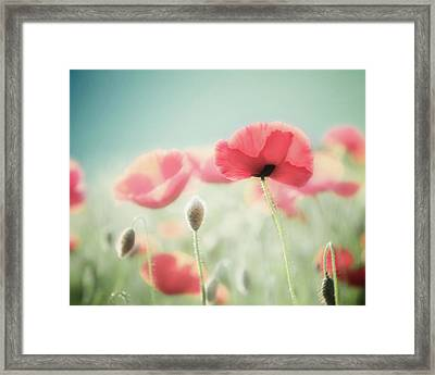 It's A New Day Framed Print by Amy Tyler