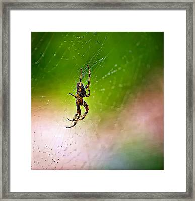 Itsy Bitsy Spider My Ass  Framed Print by Steve Harrington