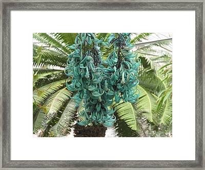 Jade Vine In Blooms Framed Print by Alfred Ng