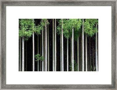 Japan, Nara Prefecture, Soni Plateau Framed Print