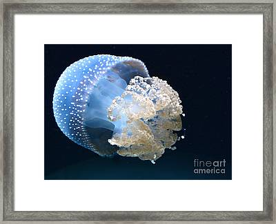 Jelly Fish Framed Print